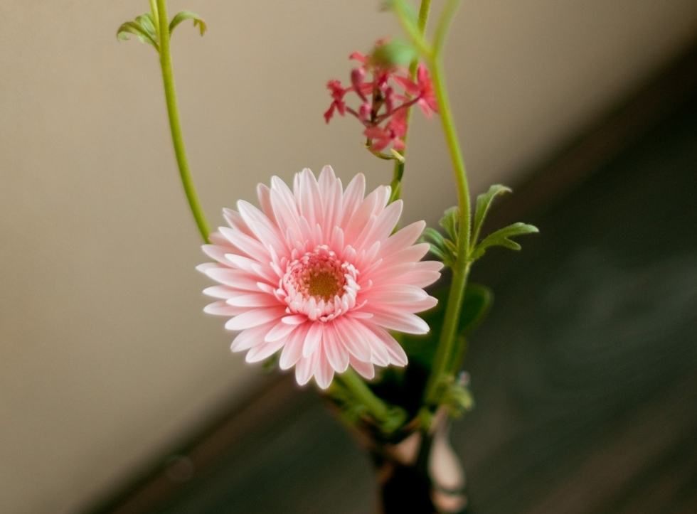 Kado Japanese Flower Arrangement Workshop   (  5,000 Yen per person )
