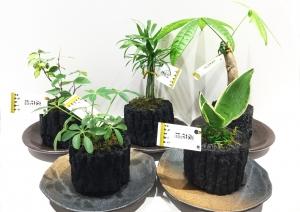 炭花壇 観葉植物 1620円