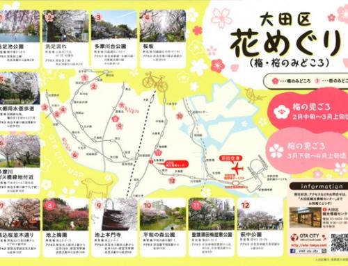 大田区花めぐり ※2021年の桜はほぼ終了