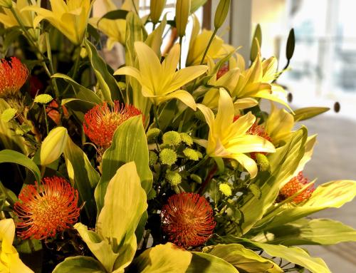 施設を彩る花々(7月の花)