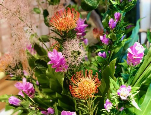 施設を彩る花々(8月の花)